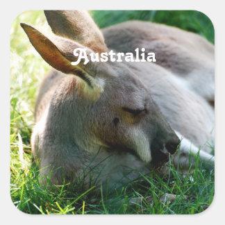Kangaroo Square Sticker