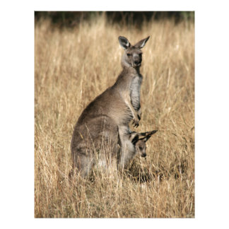 Kangaroo with Baby Joey in Pouch Letterhead