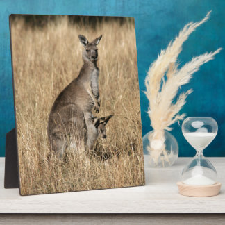 Kangaroo with Baby Joey in Pouch Photo Plaques