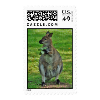 Kangaroo with oaks leaves stamps