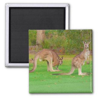 kangaroos 2 inch square magnet