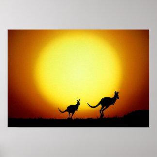 KangaROOS en el australiano interior Impresiones