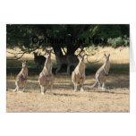 Kangaroos in a Row Cards