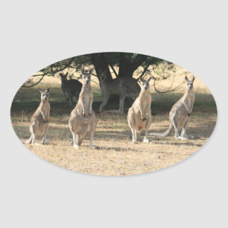 Kangaroos in a Row Oval Sticker