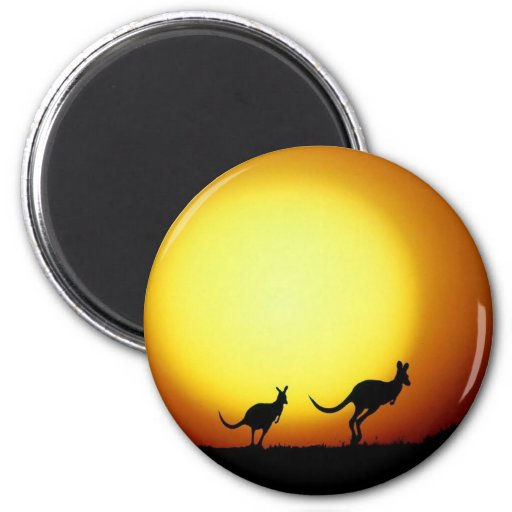 Kangaroos in the Australian Outback Magnets