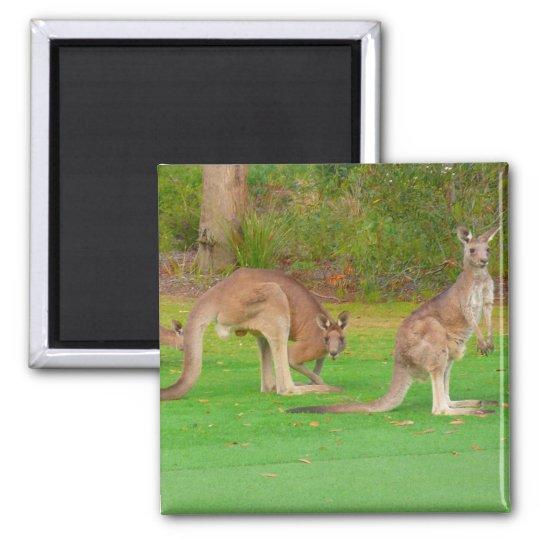 kangaroos magnet