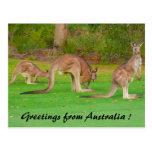 kangaroos postcards