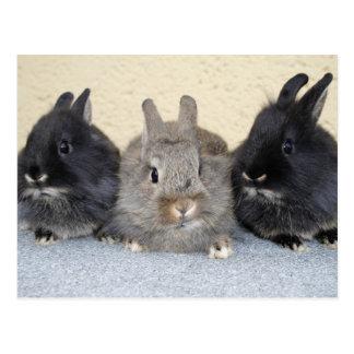 Kaninchen Postkarten