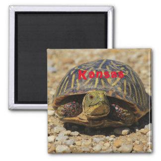 Kansas Box Shell Turtle Magnet