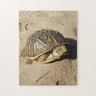 Kansas Box Shell Turtle PUZZLE