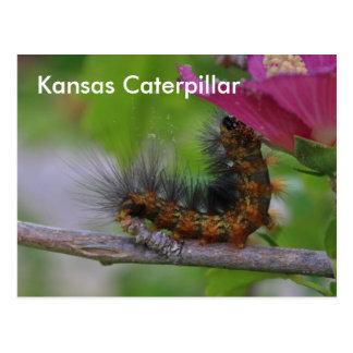 Kansas Caterpillar closeup POST CARD