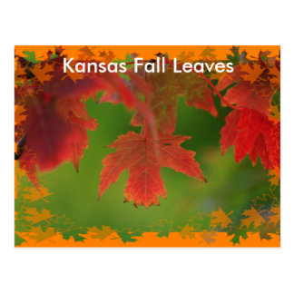 Kansas Colorful Fall Leave's POST CARD