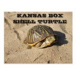 Kansas Country Box Shell Turtle Post Card