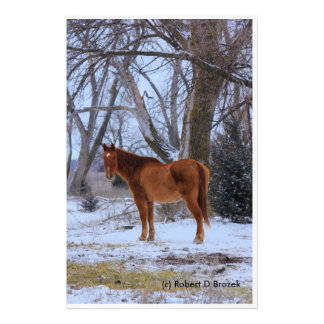 Kansas Country Horse with Snow and Tree's Photo