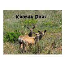 Kansas Deer Post Card