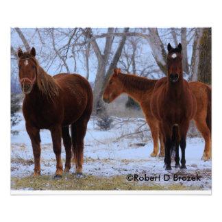 Kansas Horses  Photo Enlargement