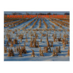 Kansas Snowy corn Stubble POST CARD