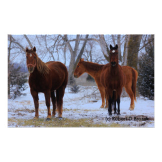 Kansas Snowy Horses Photo Enlargement Photo Print