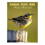 Kansas State Bird - Western Meadowlark Post Cards