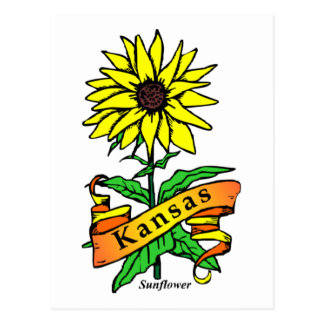 Kansas State Flower Postcard