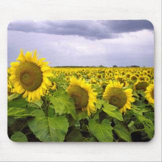 Kansas State Flower - The Sunflower Mousepad
