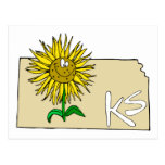 Kansas Sunflower Post Card