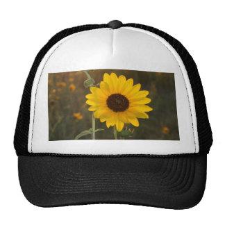 Kansas Sunflower Trucker Hat