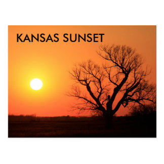 Kansas Sunset with a Tree silhouette POST CARD