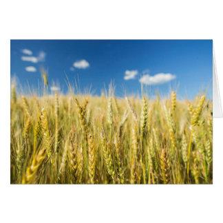 Kansas Wheat Card