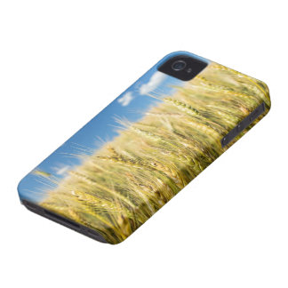 Kansas Wheat iPhone 4 Case