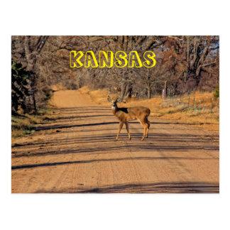 Kansas Whitetail Deer Post Card