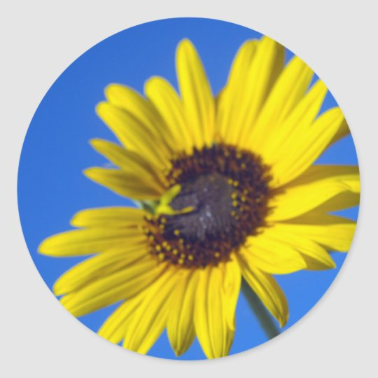 Kansas wild flower classic round sticker