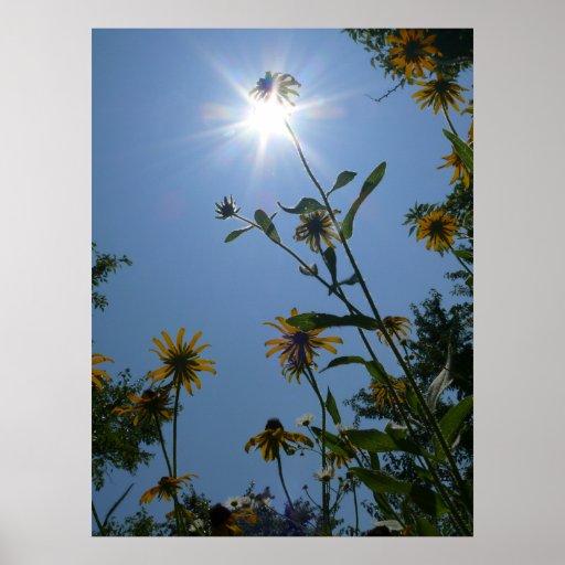 Kansas Wildflowers Poster