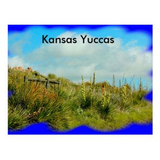 Kansas Yuccas on a hillside  Post Card