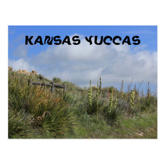 Kansas Yuccas Post Card