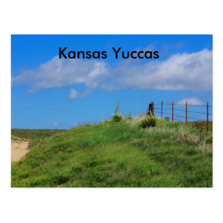 Kansas Yuccas with a fence Post Card