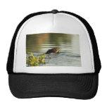 Kanuti Lake, beaver with willow branch Mesh Hats