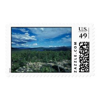 Kanuti Refuge Scrub Thickets Postage Stamp