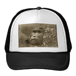 kanyoni el gorila gorros