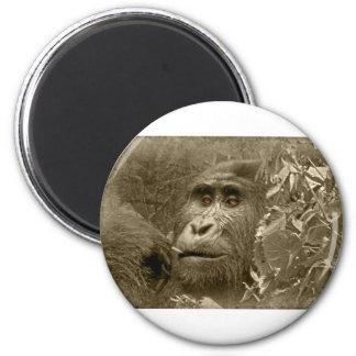 kanyoni the gorilla magnet