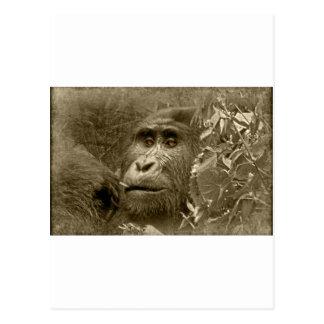 kanyoni the gorilla postcard
