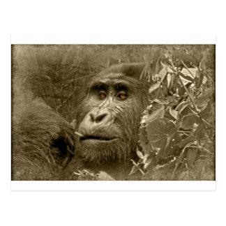 kanyoni the gorilla post card