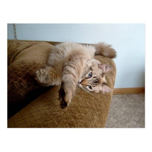 karate cat postcard