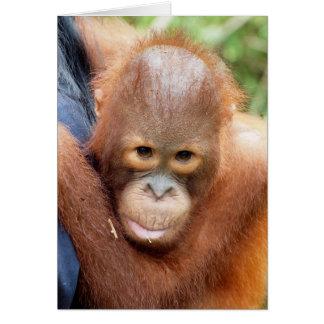 Karbank -a wildlife orphan card