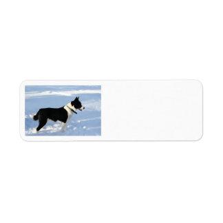 karelian bear dog full.png label