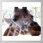 Karen Blixen's Giraffe Poster