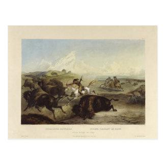 Karl Bodmer- Indians hunting the bison Postcard
