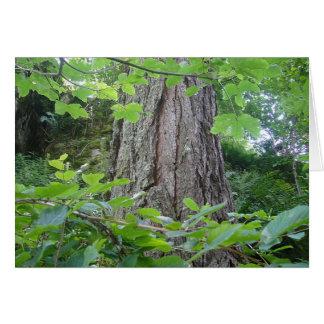 Karte5 Baumstamm Blätterkranz Kartenserie Wald Grußkarten