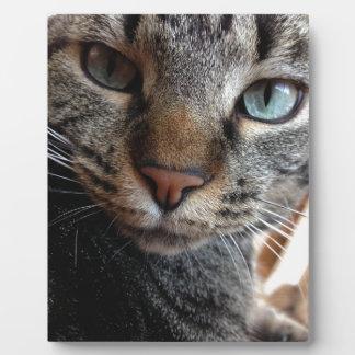 Kat-a-tude Collection Plaque