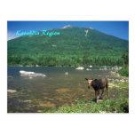 Katahdin Region Maine Postcard